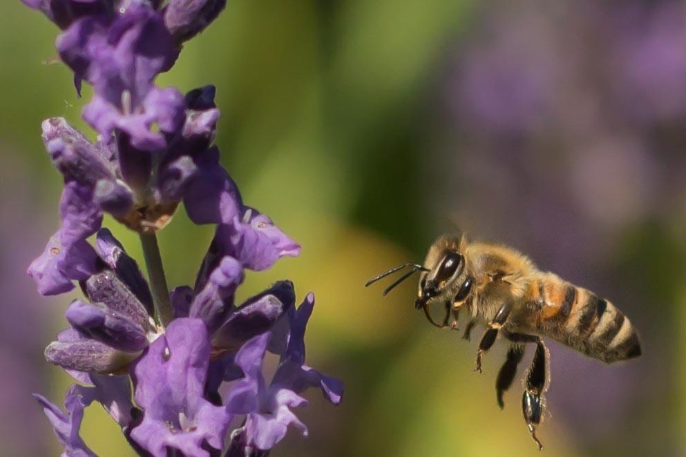 Die Honigproduktion läuft :-)