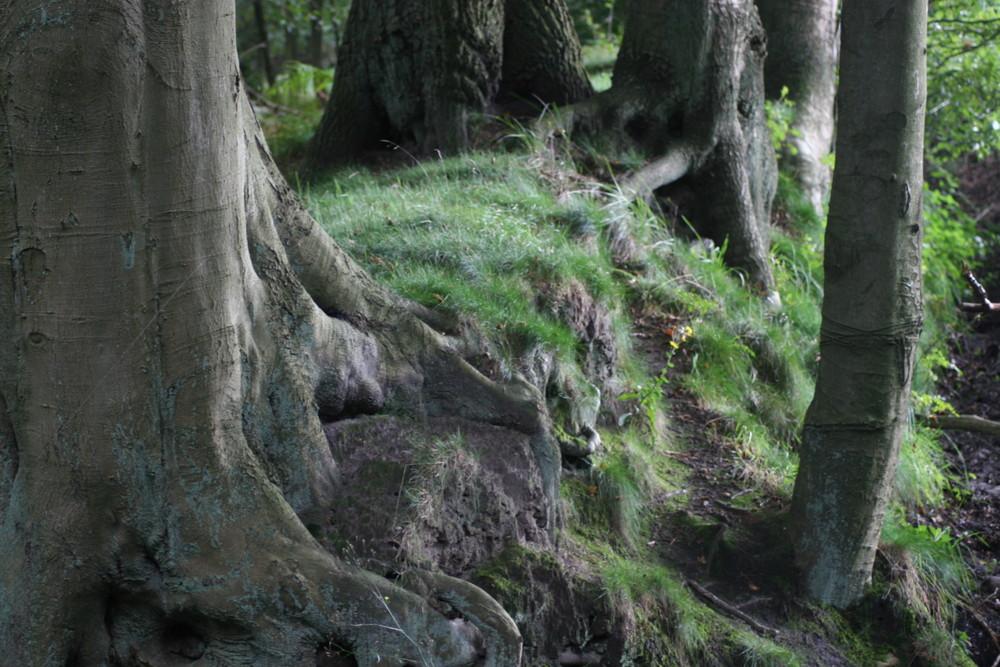 Die Hüter der Bäume