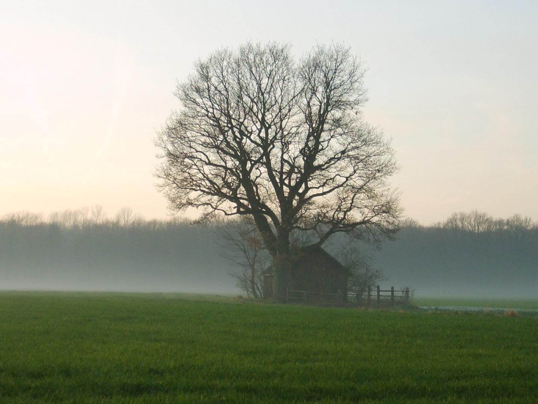 Die Hütte im Nebel