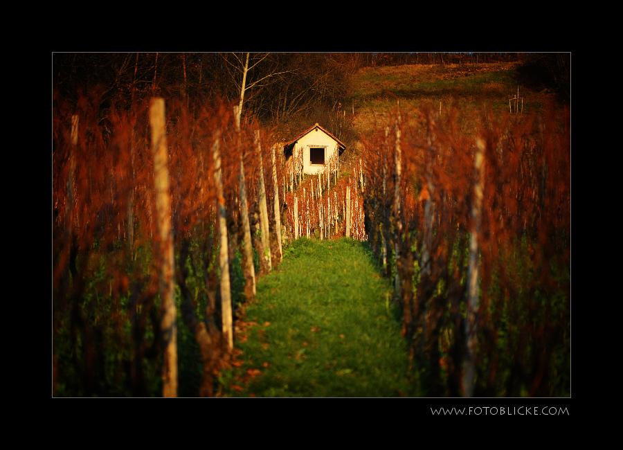Die Hütte im Weinberg