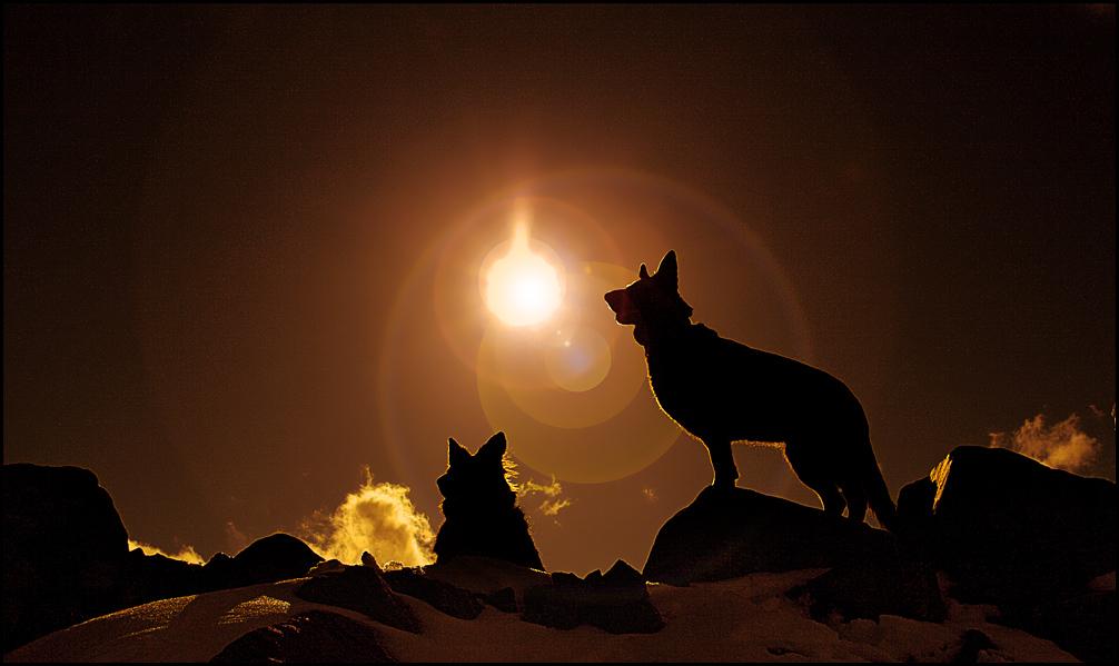 Die Hunde des RA