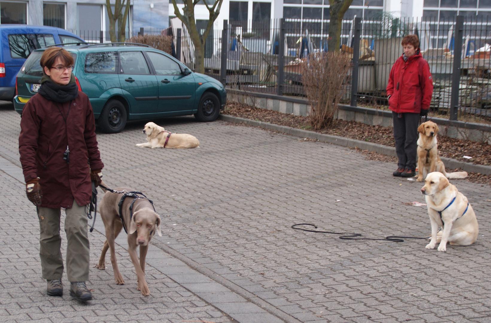 Die Hundeflüsterin (2): Totale Ignoranz