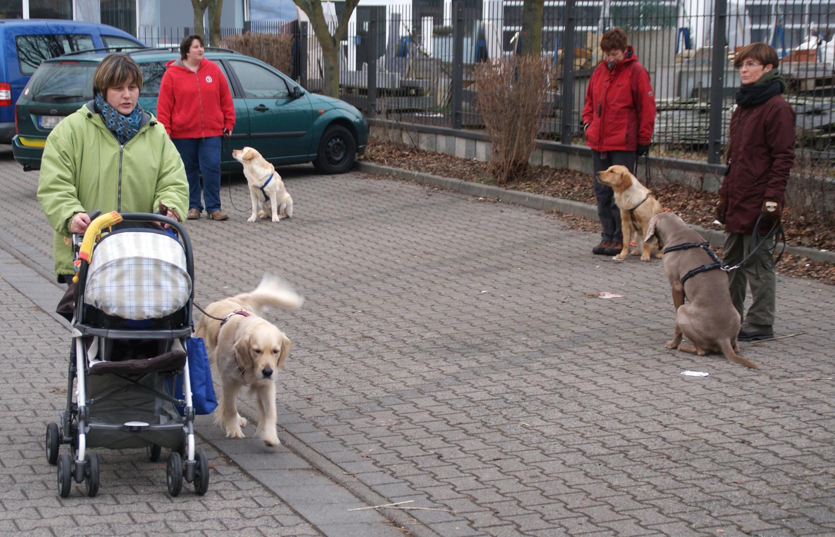 Die Hundeflüsterin (3): Kinderwagen sind Luft