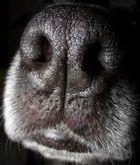 Die Hundeschnauze / Nasse