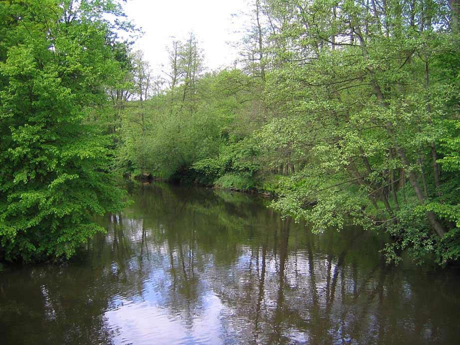 Die Ilmenau bei Bad Bevensen (1)