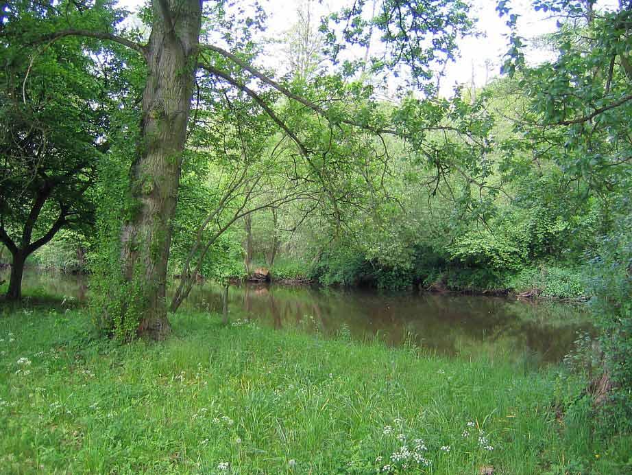 Die Ilmenau bei Bad Bevensen (2)