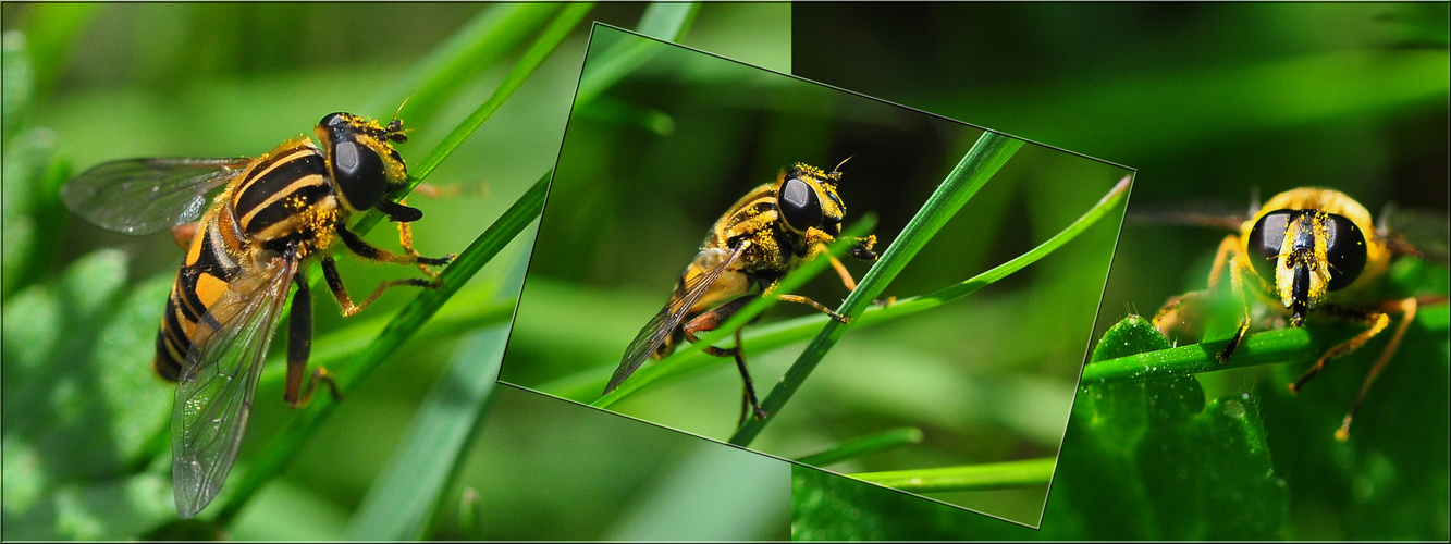 Die Insektenwelt ......