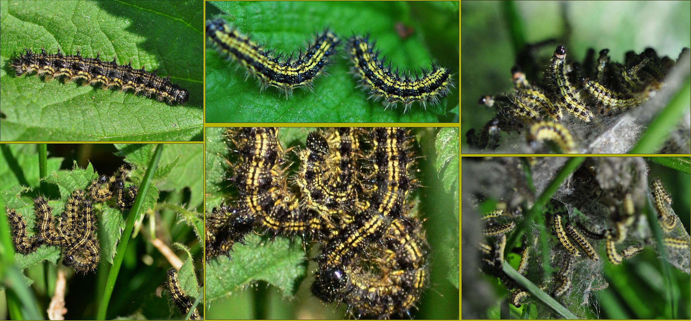 Die Insektenwelten / Entwicklungen .....