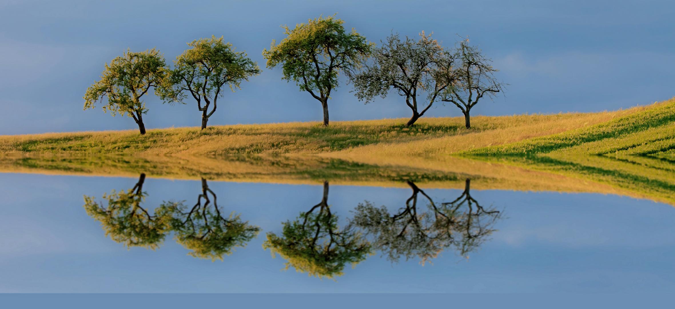 ~Die Insel der 5 Bäume ~