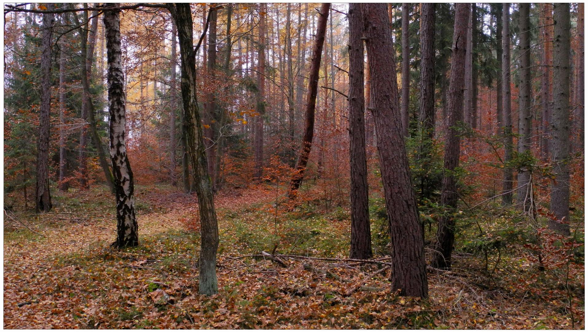 Die intensiven Farben des Novembers (los colores intensivos del noviembre)