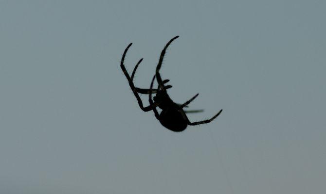 Die Izi bizi Spinne die Baute sich ein Netz ;o)