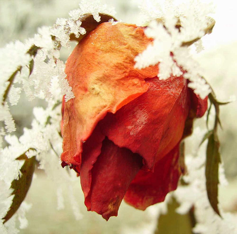 Die Kälte kann unseren Herzen nichts anhaben ;-)