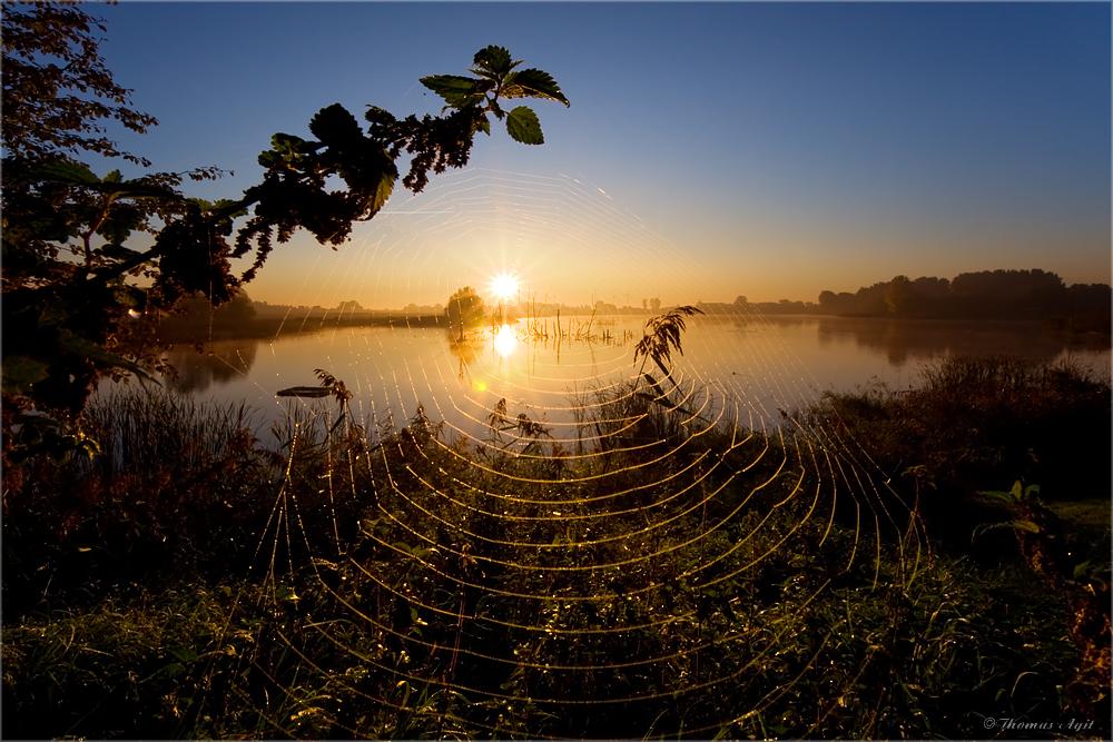 Die Kamplake in Unseburg... Teil 63 Die Spinnen