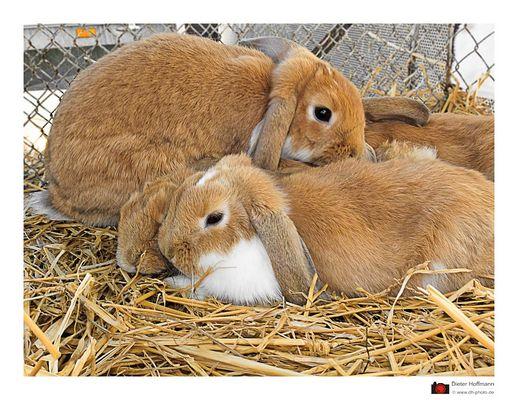 die Kaninchenfamilie