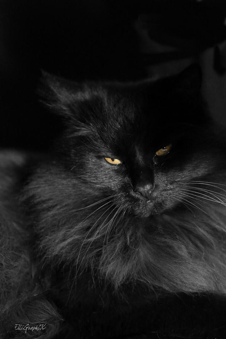 die Katze .....
