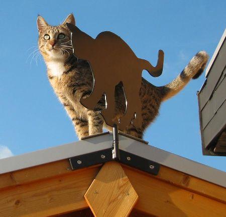 Die Katze auf dem Blechdach!