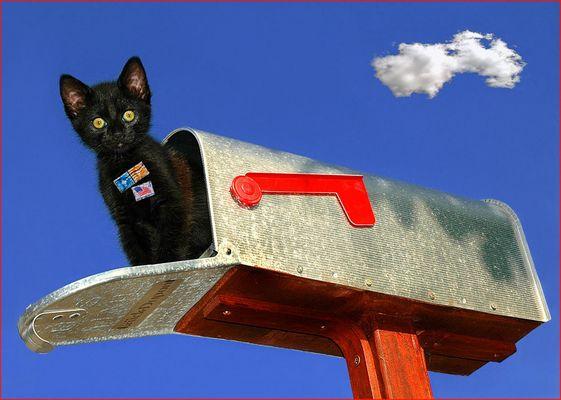 die Katze auf dem heißen Blech....briefkasten (Reload)