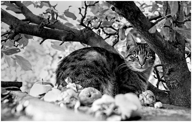 Die Katze auf dem heißen Blechdach