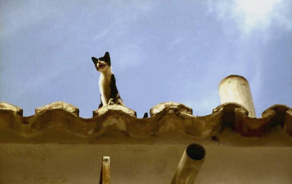 Die Katze auf dem heissen Blechdach
