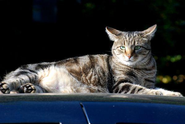 """""""Die Katze auf dem heißen Blechdach"""""""