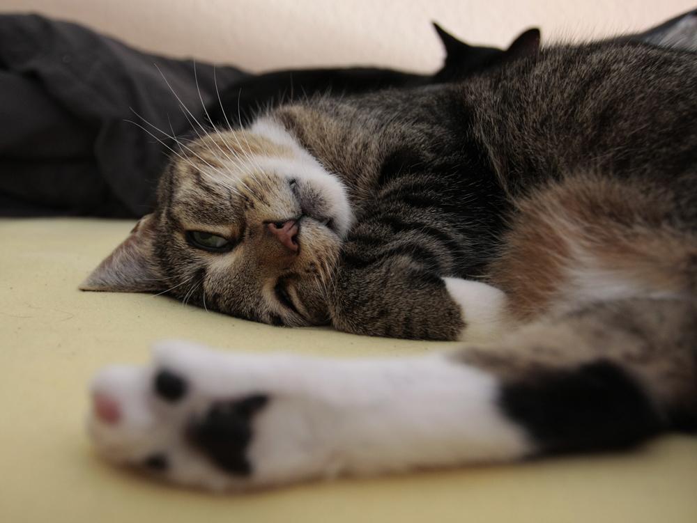 Die Katze auf dem Hochbett