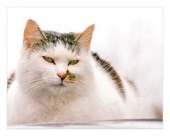 Die Katze auf dem kalten Autodach.....