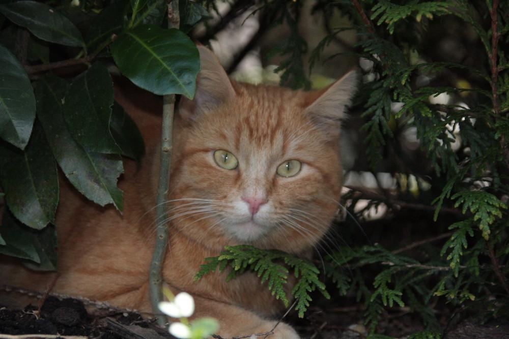 Die Katze auf der Pirsch