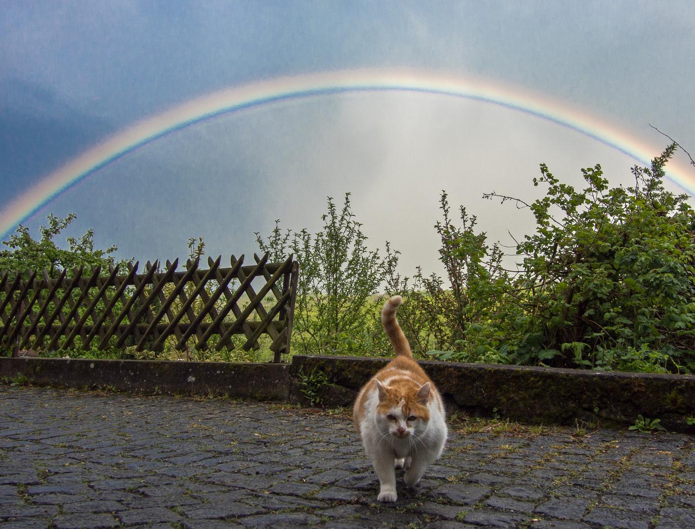 Die Katze aus dem Regenbogen