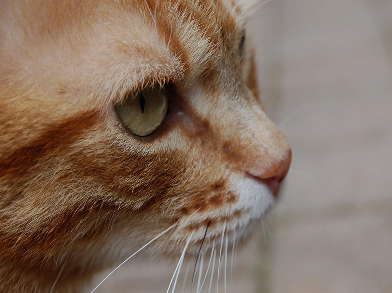 Die Katze aus der Nachbarschaft