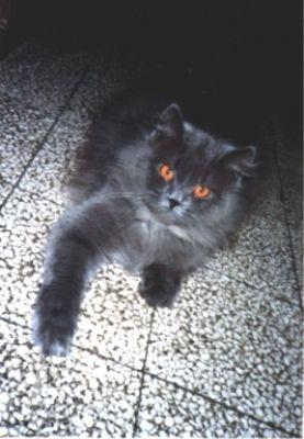 Die Katze aus Turin