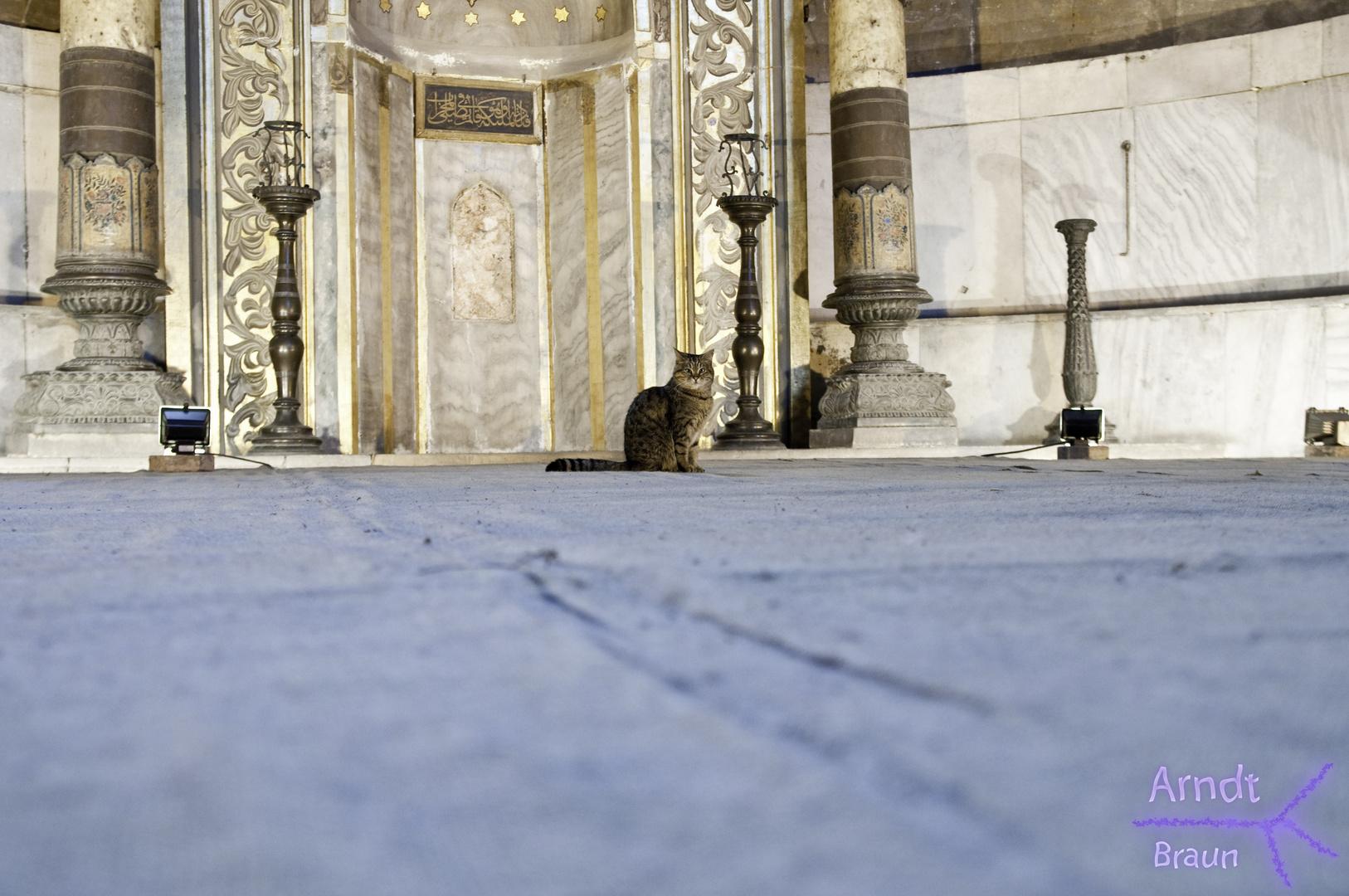 Die Katze der Hagia Sophia