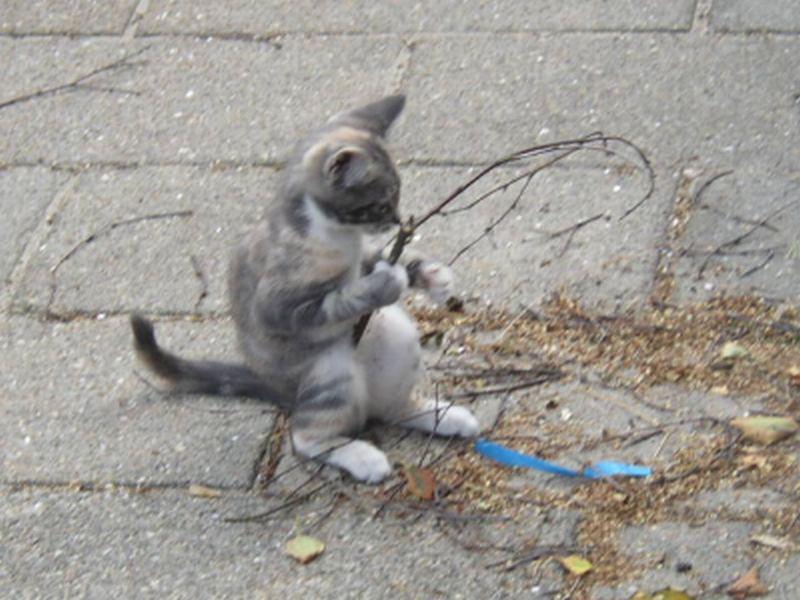 Die Katze, die angelte