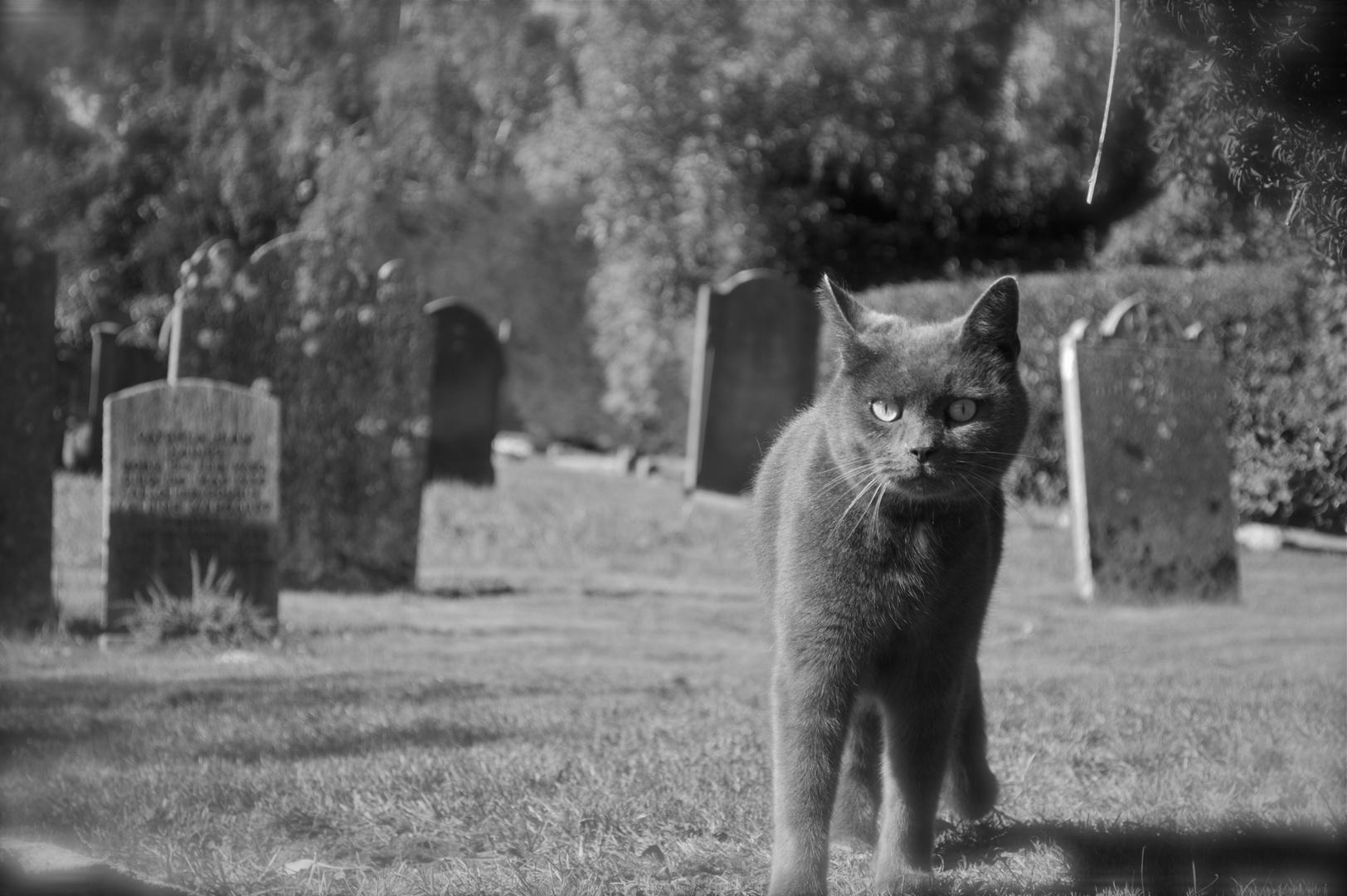 Die Katze die den Friedhof bewacht 1