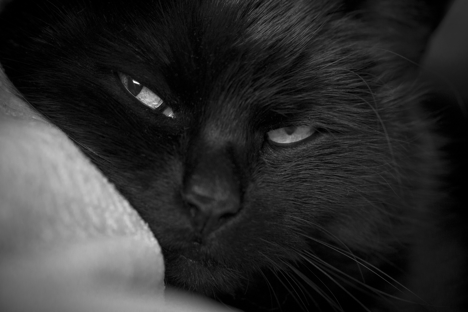 Die Katze II