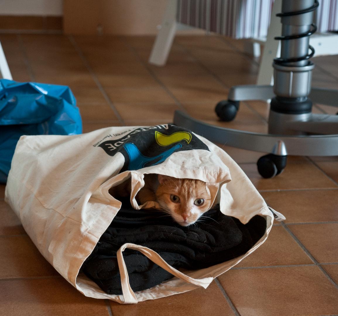 ...die Katze im Sack gekauft.