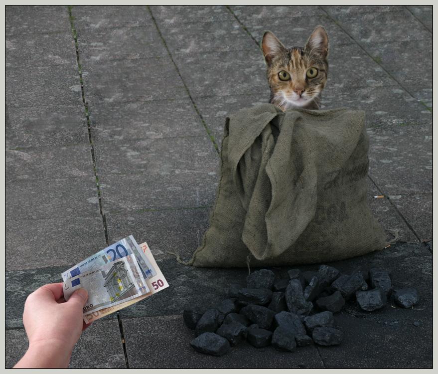 Die Katze Im Sack Kaufen Englisch