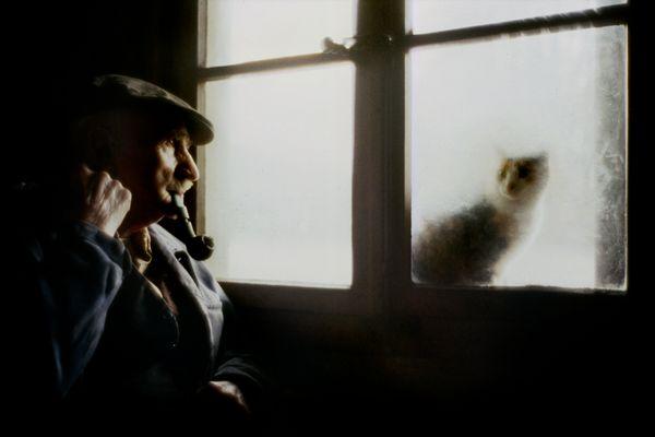 Die Katze im Schnee-Fenster