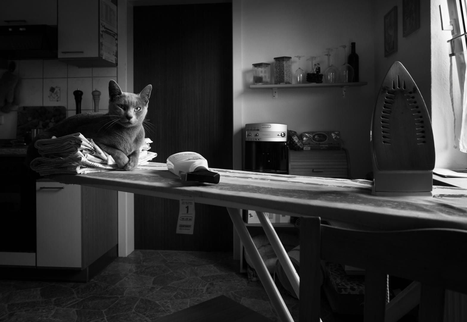 Die Katze in der Küche ersetzt das Bügeln nicht...