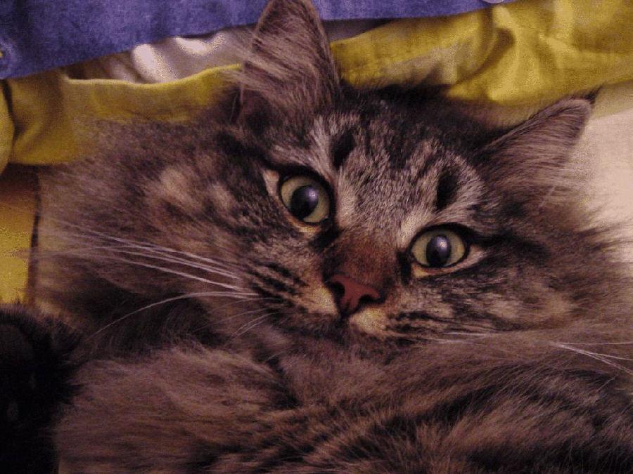 Die Katze in meinem Bett