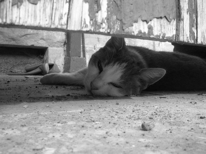 Die Katze Inka