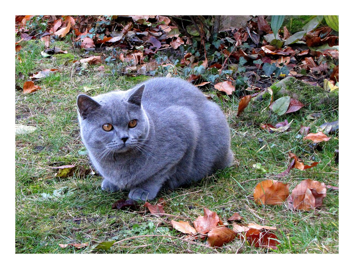 Die Katze ist das Meisterstück der Natur