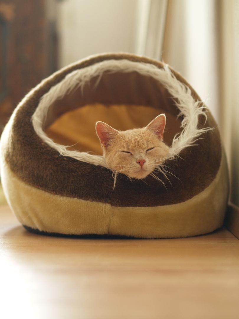 Die Katze Maja