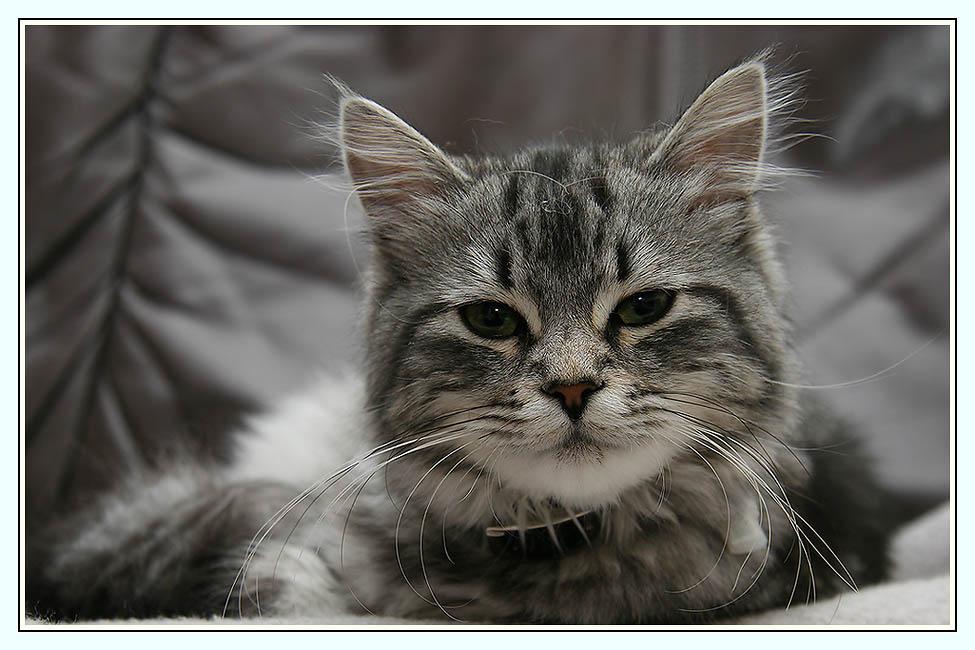 Die Katze meiner Tochter