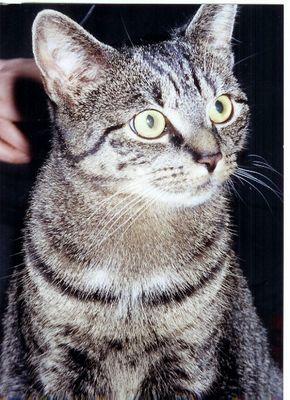 Die Katze mit nur anderthalb Ohren