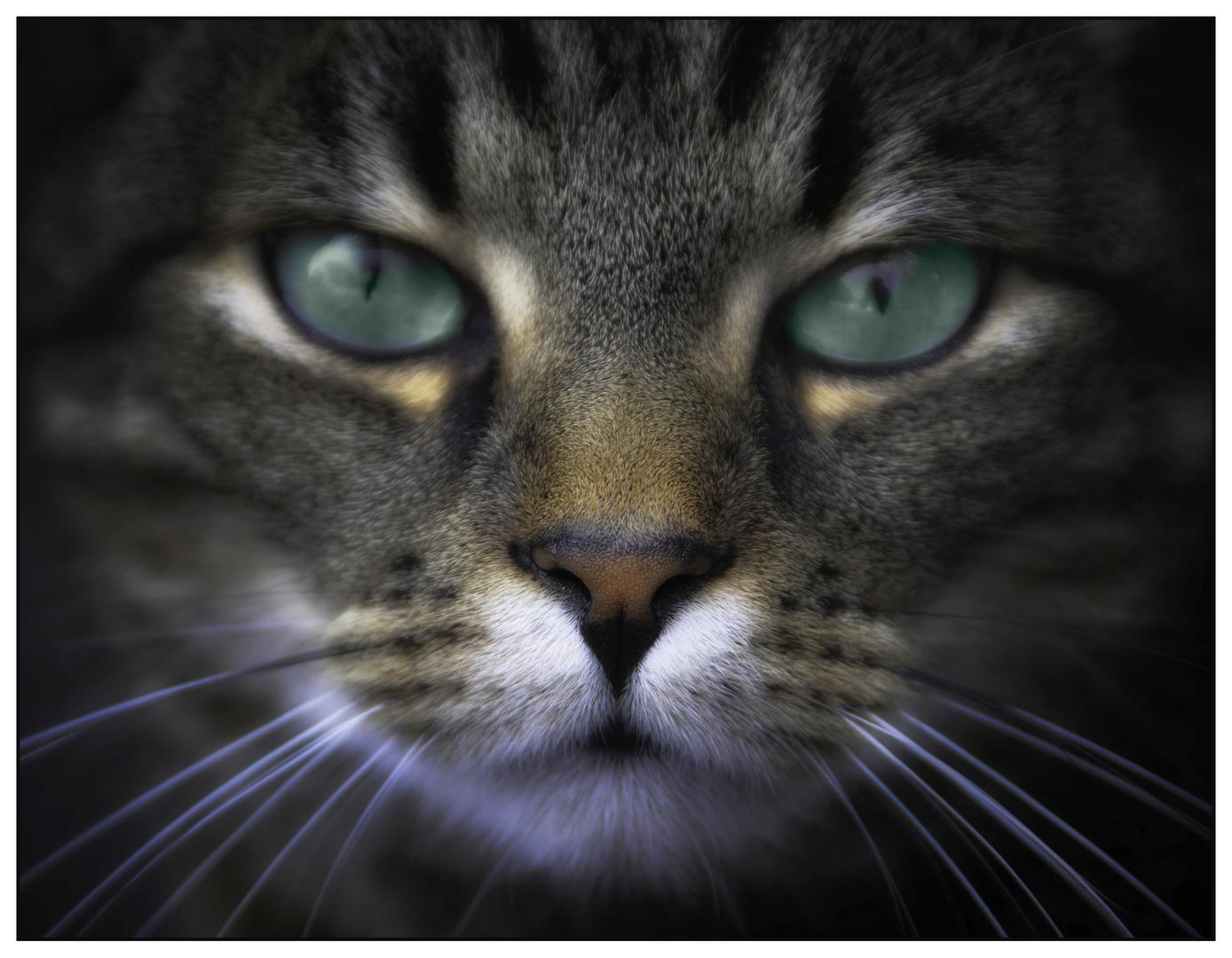 Die Katze Paul