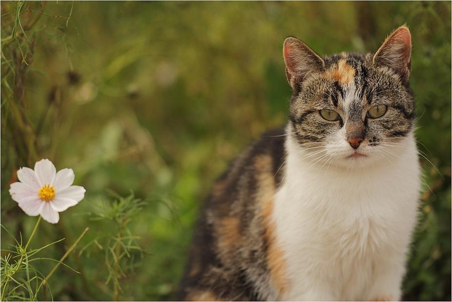die Katze und das Plümchen