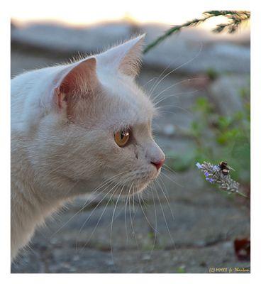 Die Katze und die kleine Hummel...
