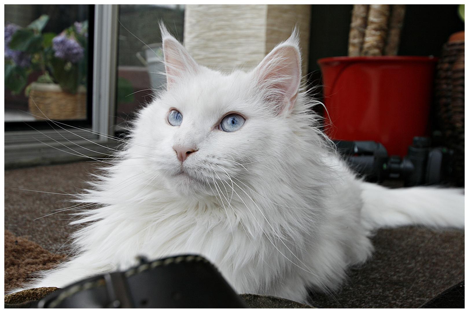 Die Katze von Welt ruht sich auch gern auf alten Latschen aus :-)))