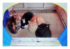 Die Katzen sind im Kinderhaus....