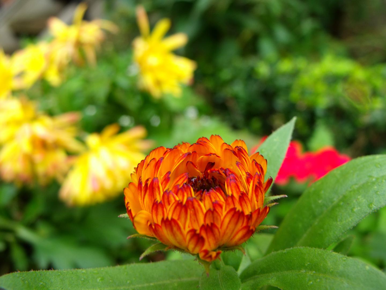 Die kleine Blume